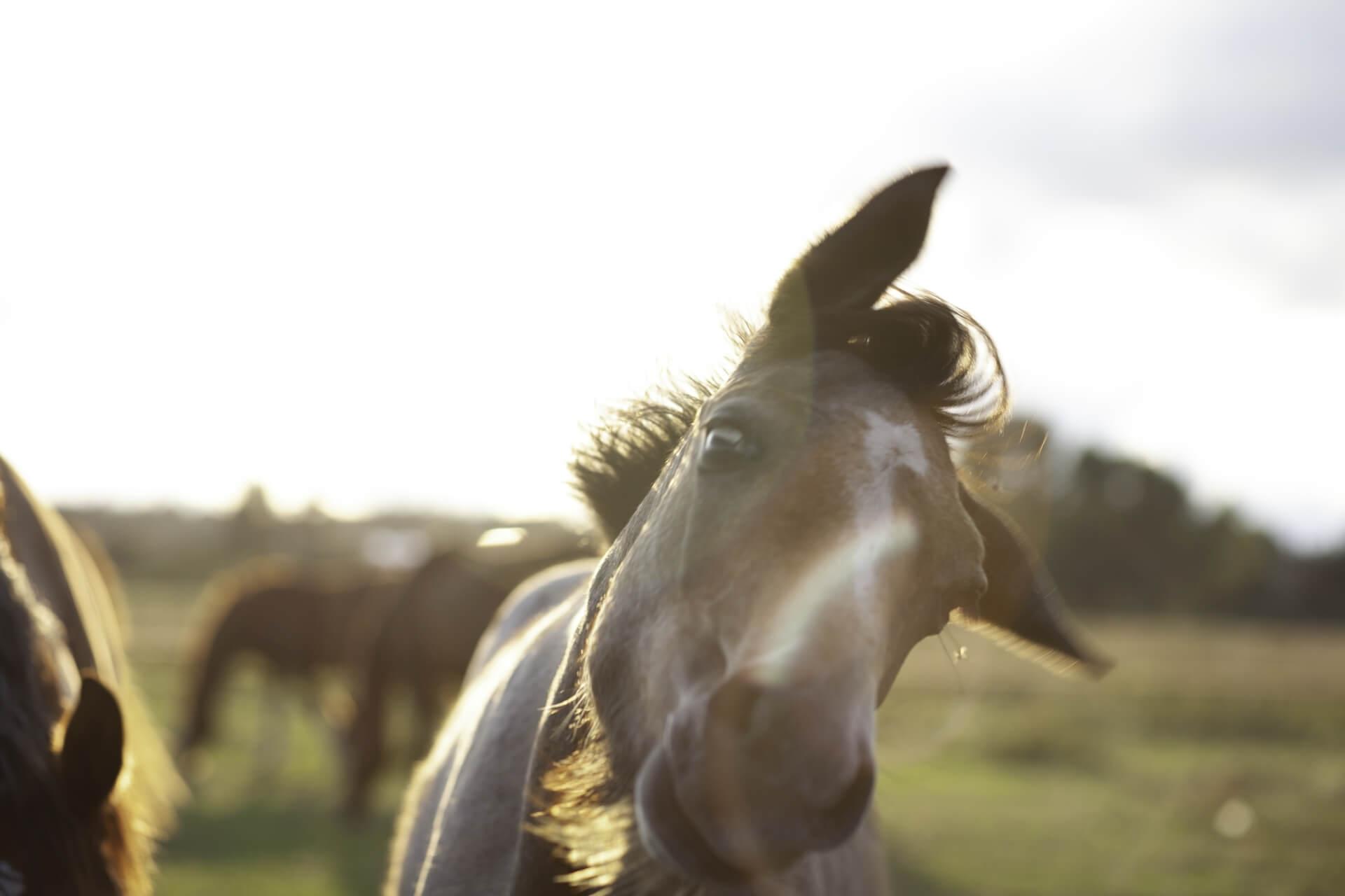 """Viktorijos Misiulės paroda """"Ten, kur žirgai"""""""